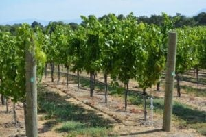 farm-labor-contractor-napa